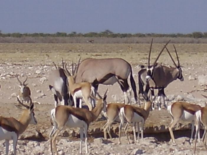 _wsb_702x525_namibia07167